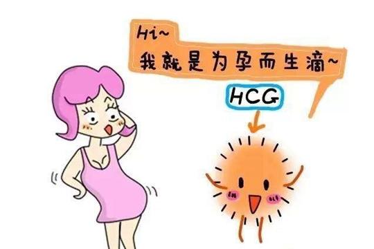 HCG数值高或低代表什么?